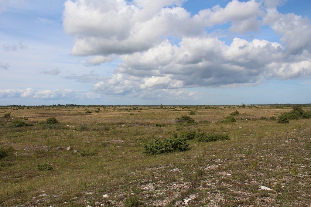 Orkidévandring på Öland vår 2020
