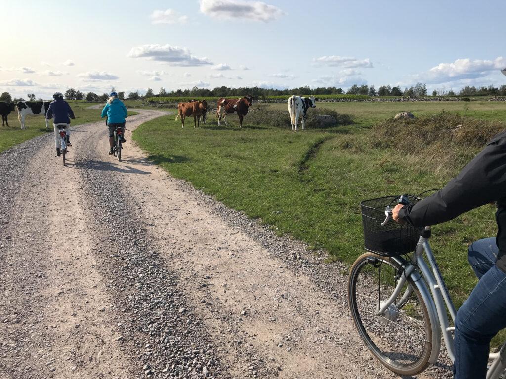 Cykling i det öländska landskapet